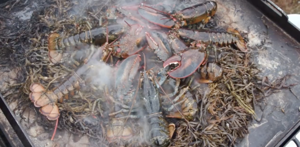 Lobster Bake on House Island in Casco Bay