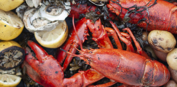 Maine Lobster Bake on the Coast of Peaks Island